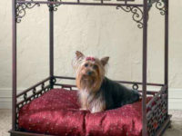 Luxurious Pet Bed 200x150 Simple and Stylish DIY Pet Beds