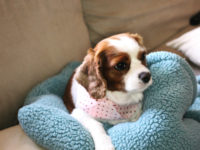 Simple Scarf 200x150 Adorable Dog Clothes to Make for Your Favourite Pooch