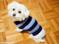 Simple Strip Sweater 200x150 Adorable Dog Clothes to Make for Your Favourite Pooch