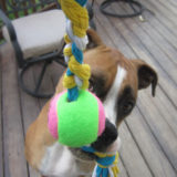 7 Cool Dog Toys to Make Yourself