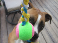 Yarn Scrap Dog Toy 200x150 7 Cool Dog Toys to Make Yourself