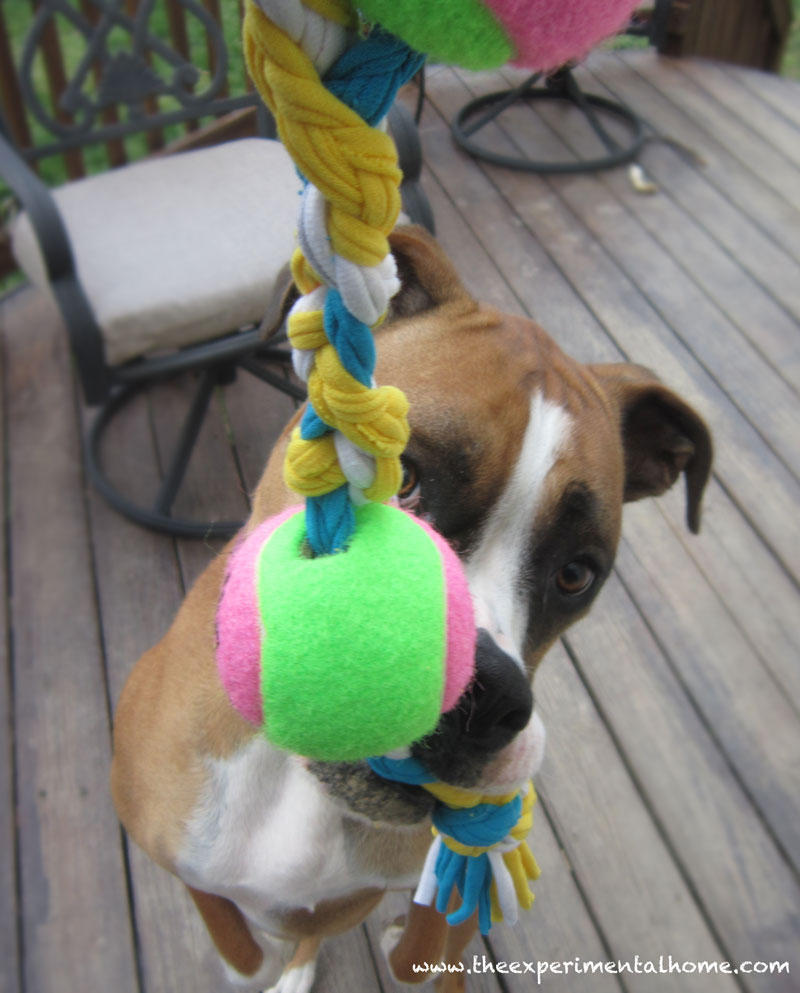 Yarn Scrap Dog Toy