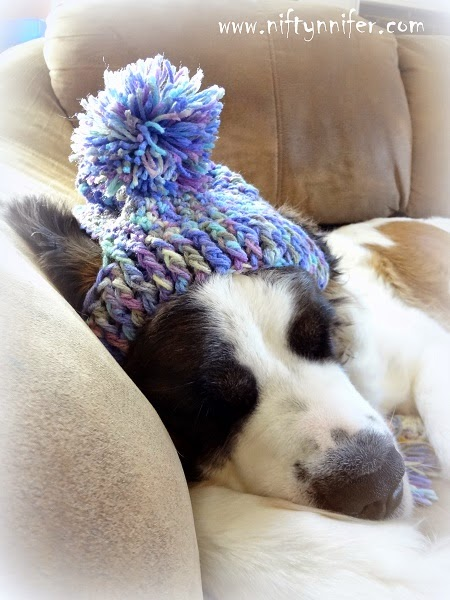 Dog silly hat