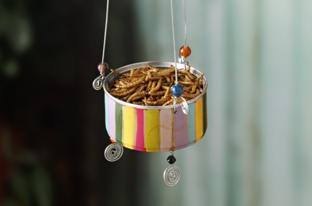 tuna can bird feeder
