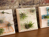 Air plant string art 200x150 Unique Art Projects Made with String