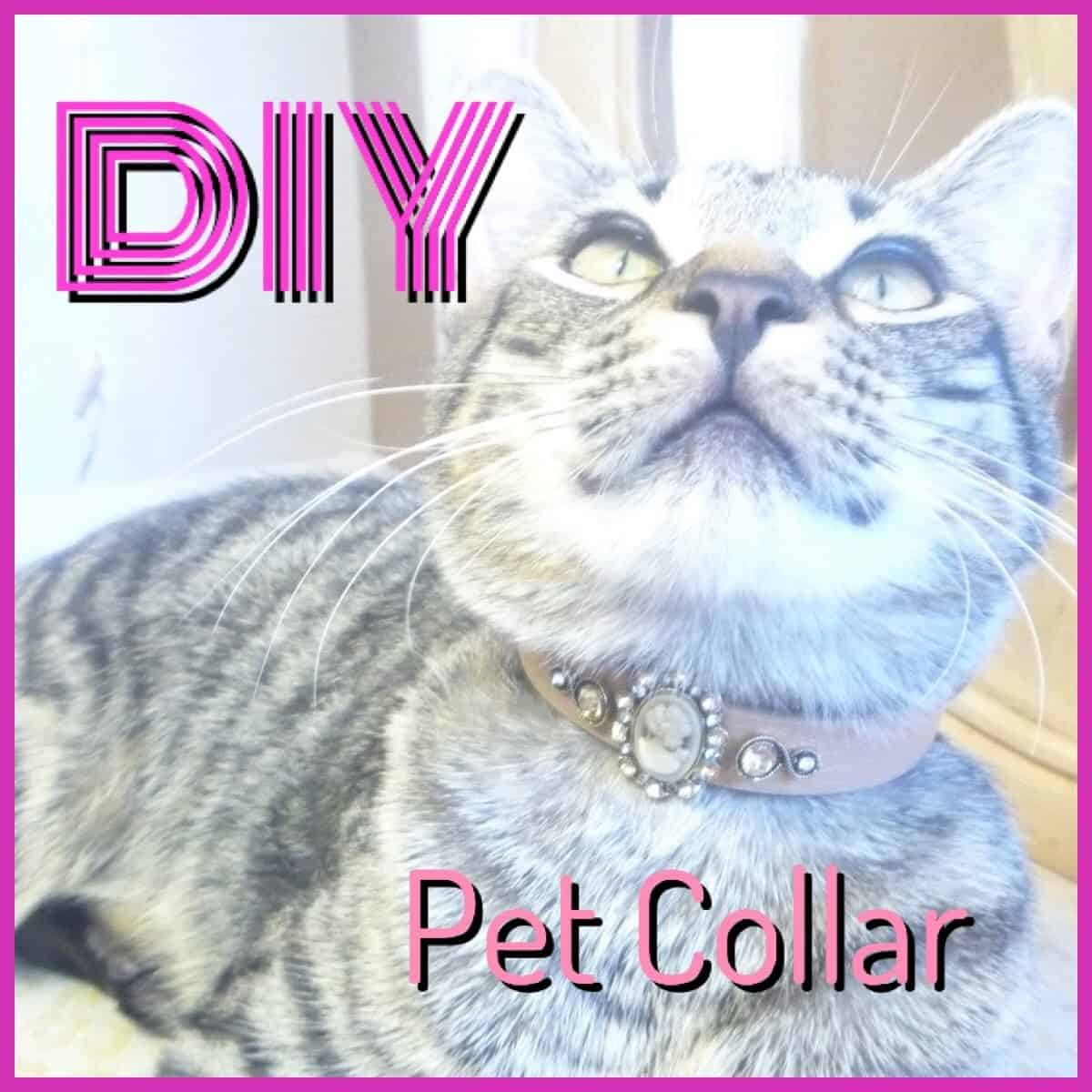 Belt cat collar