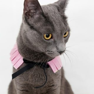DIY Cat Collars That are Insanely Adorable