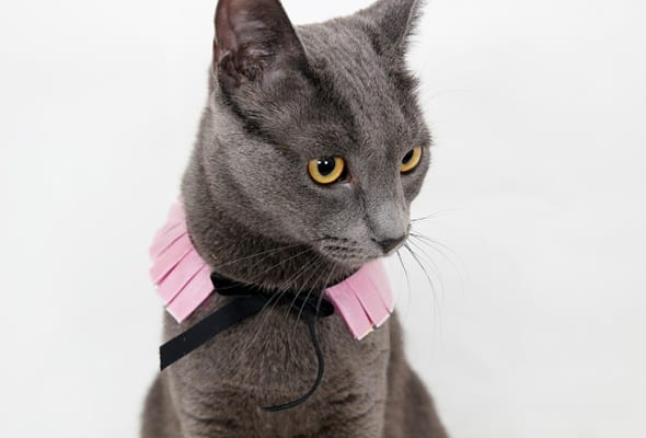 """Kitty cature"" ruff collar"