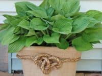 Laundry Basket Hamper 200x150 10 Ways to Show Off Your Green Thumb With Cool DIY Planters