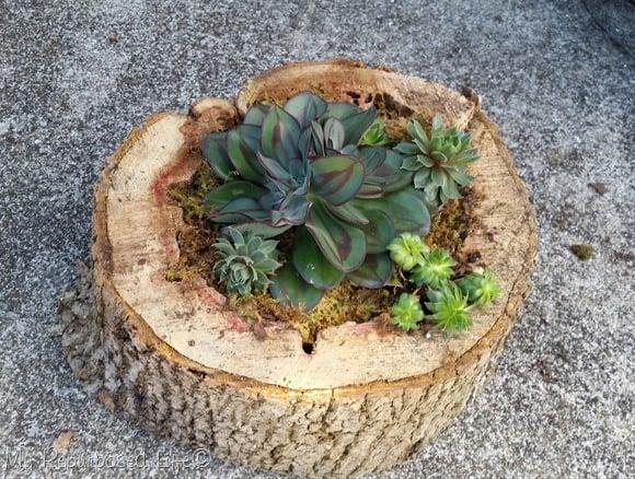 Tree planter
