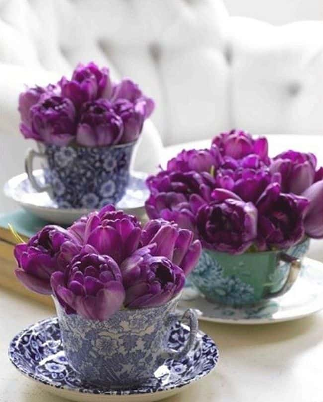 Beautiful Teacup flowers