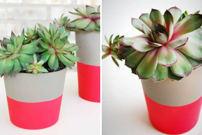 Dipped neon plant pots