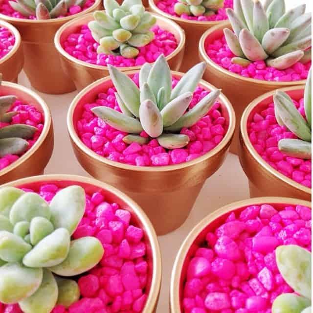 Neon rock succulent planters