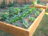 Wide Garden Bed 200x150 10 DIY Raised Garden Beds To Improve Your Garden