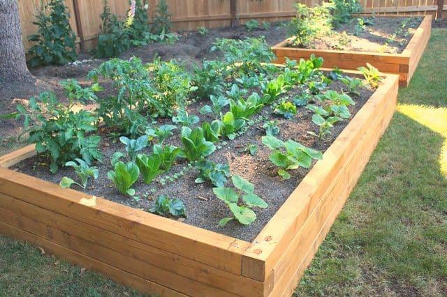 Wide Garden Bed