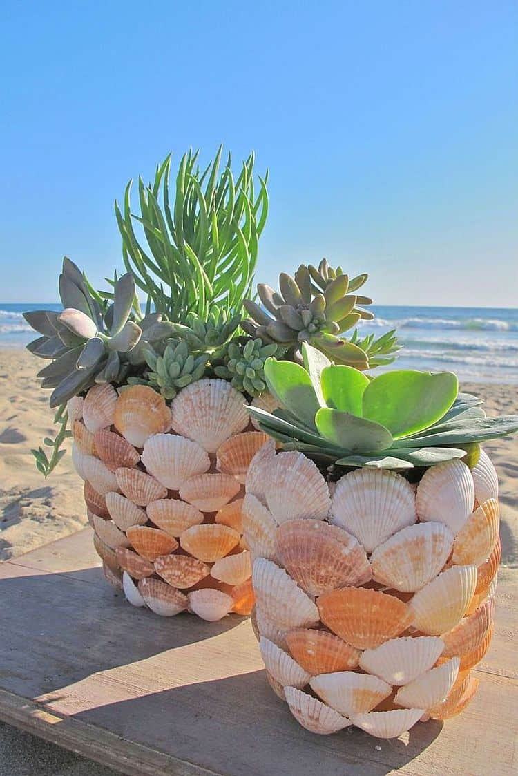 Homemade seashell Planter