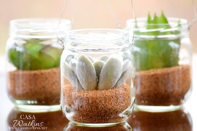 Mini succulent jars