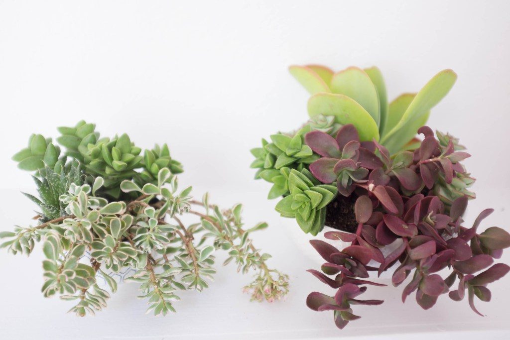 succulent bowl garden
