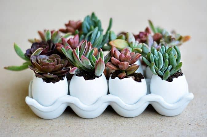 Homemade succulent eggshell planters