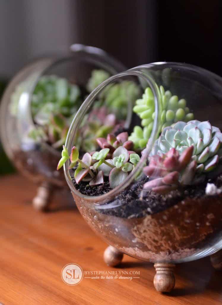 Succulent globe