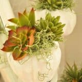 Succulent Heaven: Unique DIY Ways To Include Succulents Into Your Home