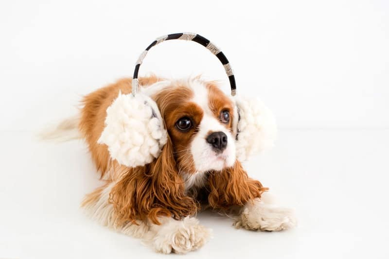 Popom Ear Muffs