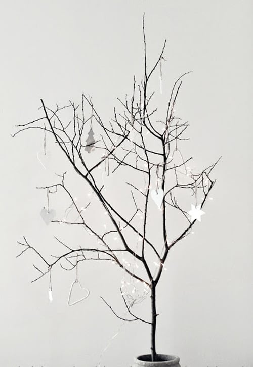 Small dried tree