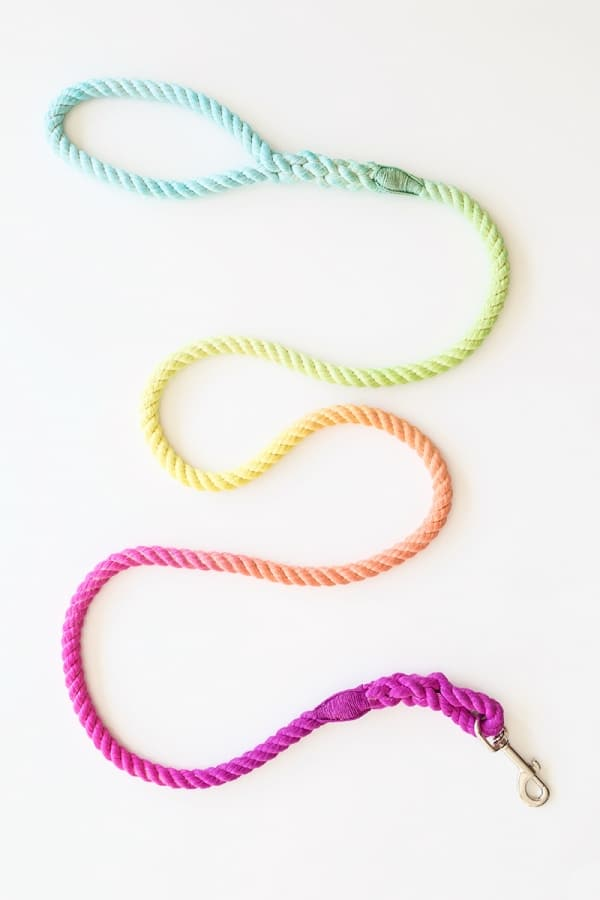 Technicolor Dog Leash