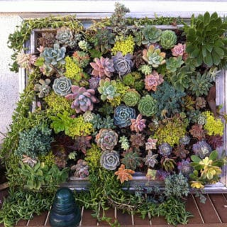DIY Vertical Gardens for Unconventional Gardeners
