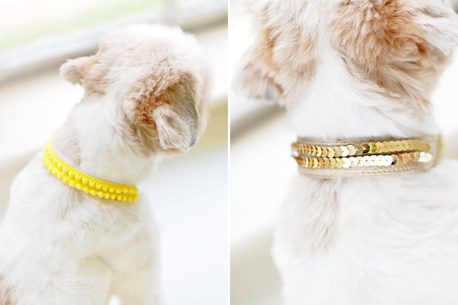 11 Diy Dog Collars For Your Favorite Pooch. Nosew Dog Collar Sleeves. Wiring. Homemade Dog Harness Patterns At Scoala.co