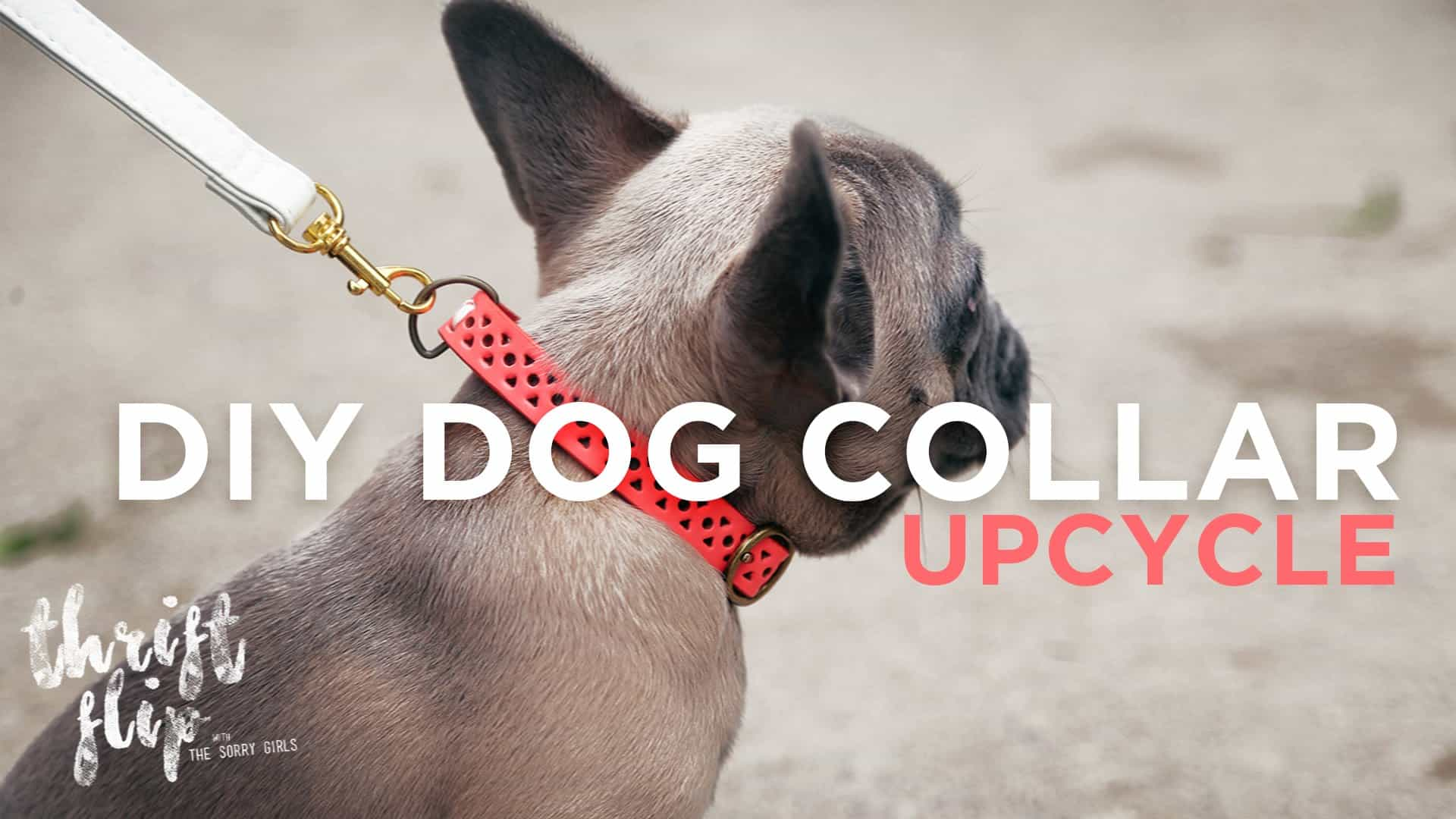 Upcycled belt dog collar