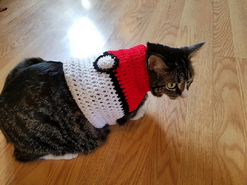 Adorable Outfits Diy Cat Clothing For Your Furry Friend