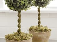 Small and Stunning DIY Topiaries You'll Want In Your Home