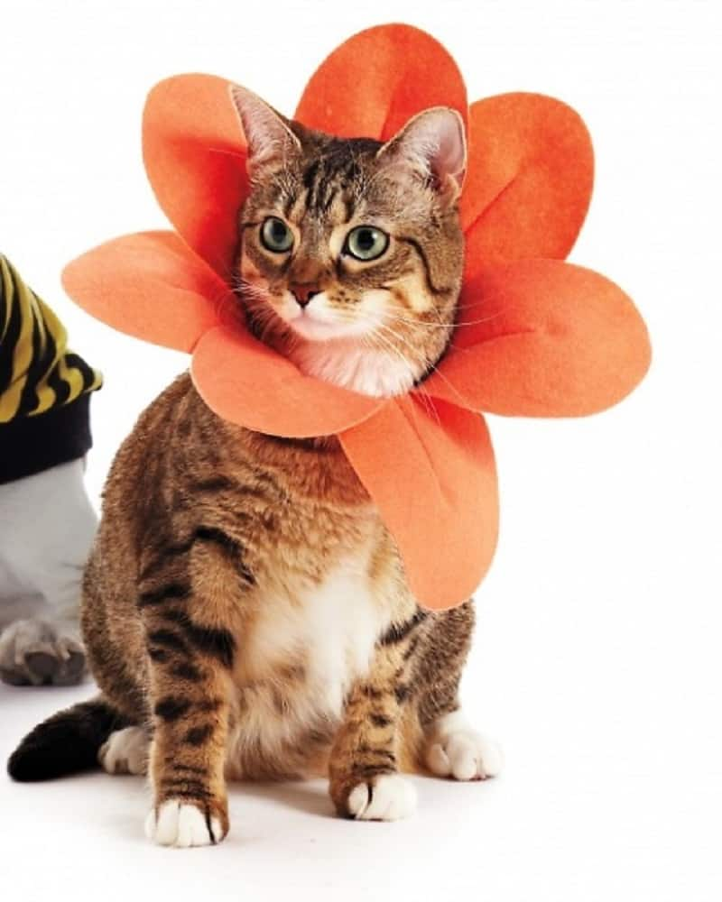 Kitty flower collar