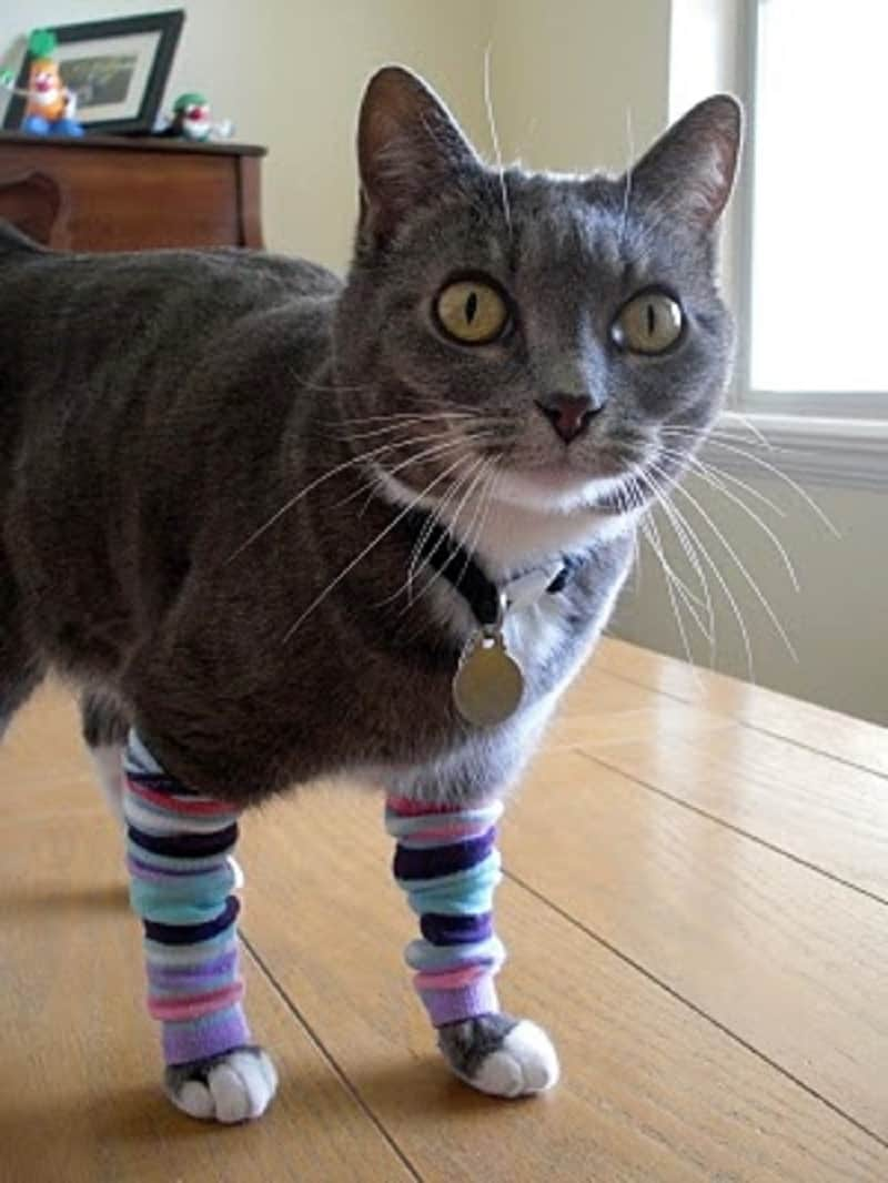 Leg warmers for cats
