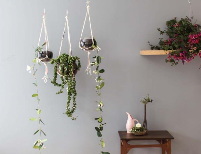 Modern macrame plant hangers