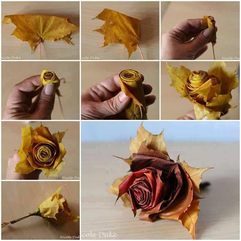 Rolled leaf roses