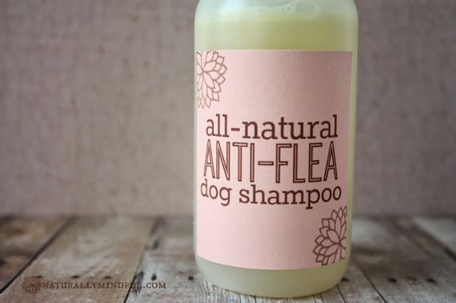 Natural anti-flea shampoo