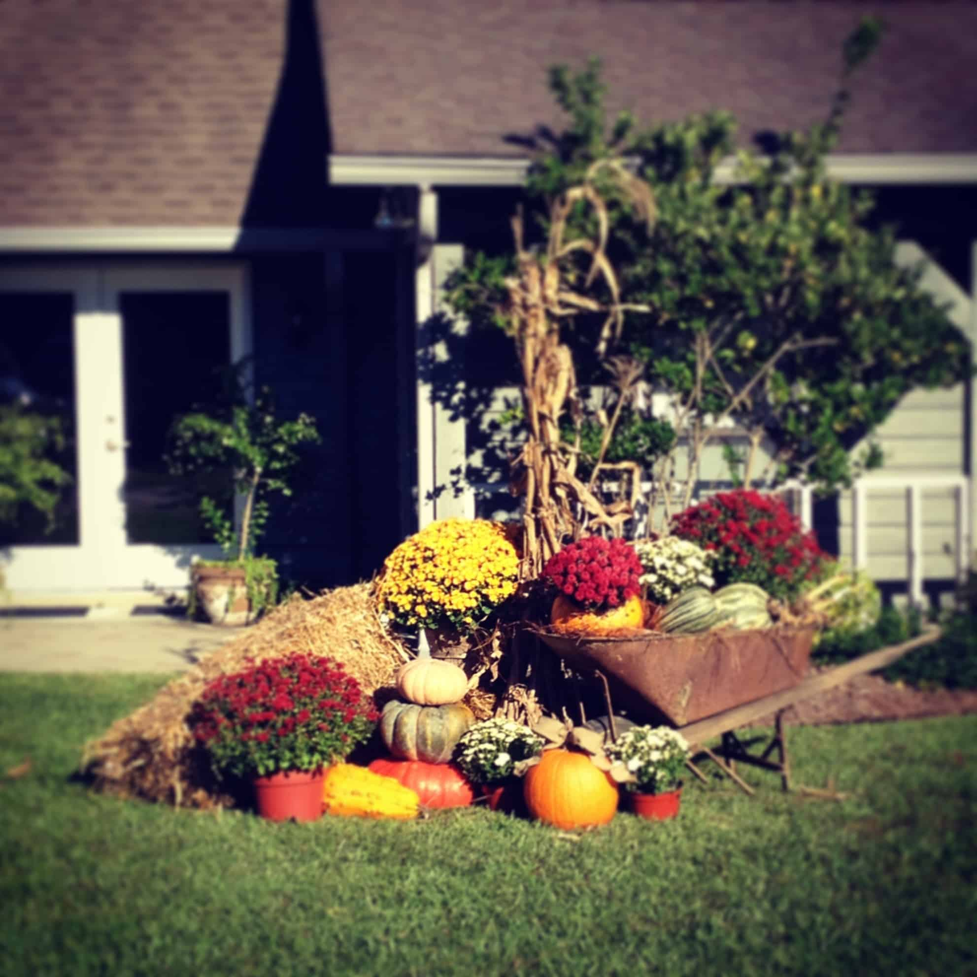 Harvest wheel barrow display