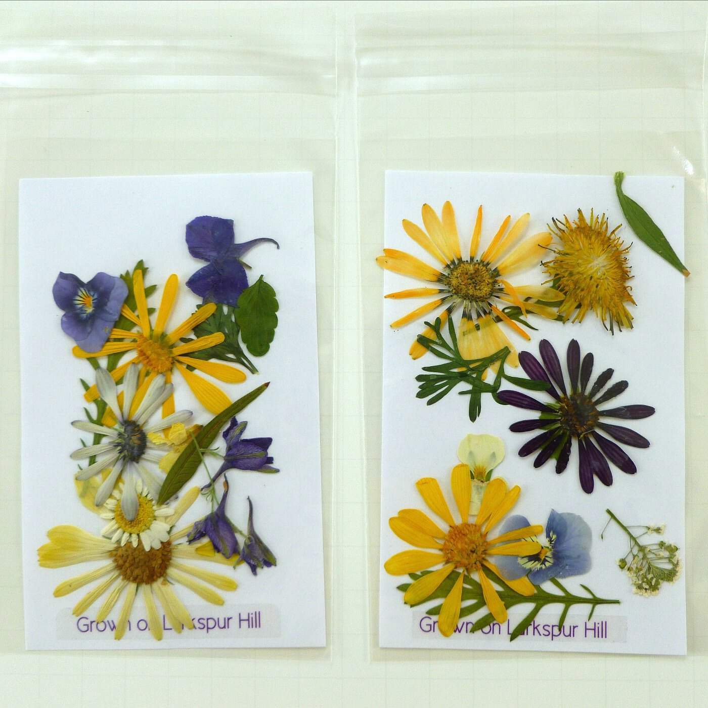 DIY pressed flower stationary