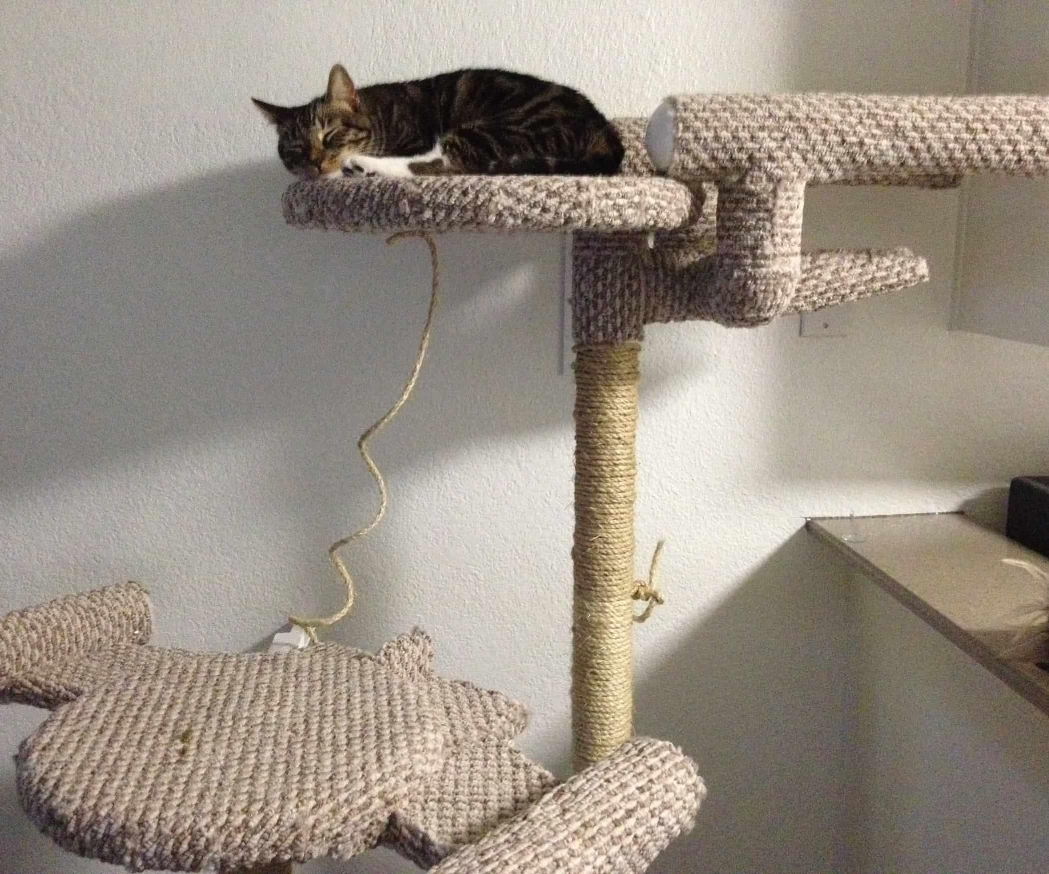 Enterprise shaped cat climber