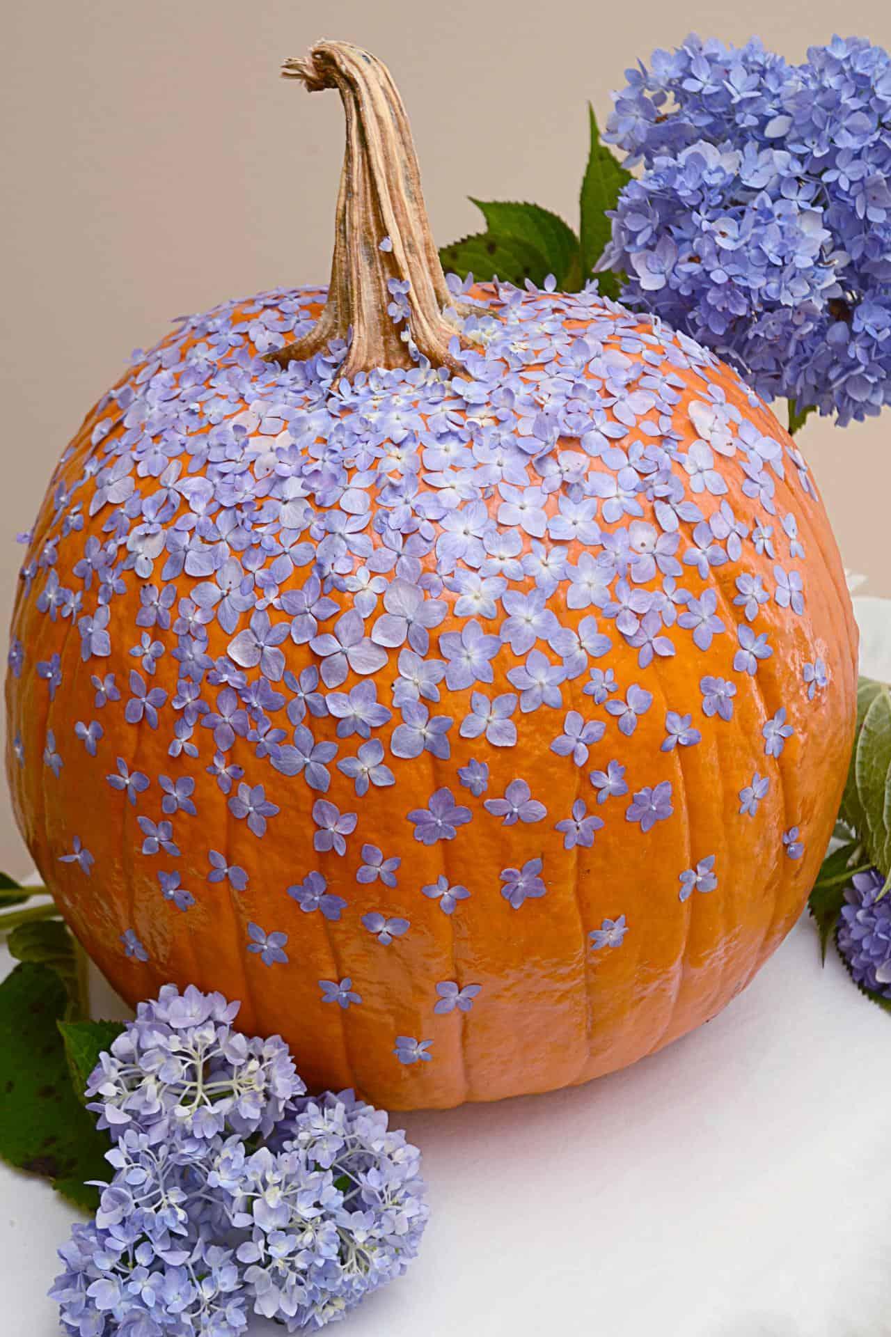 Scattered dried petal pumpkin