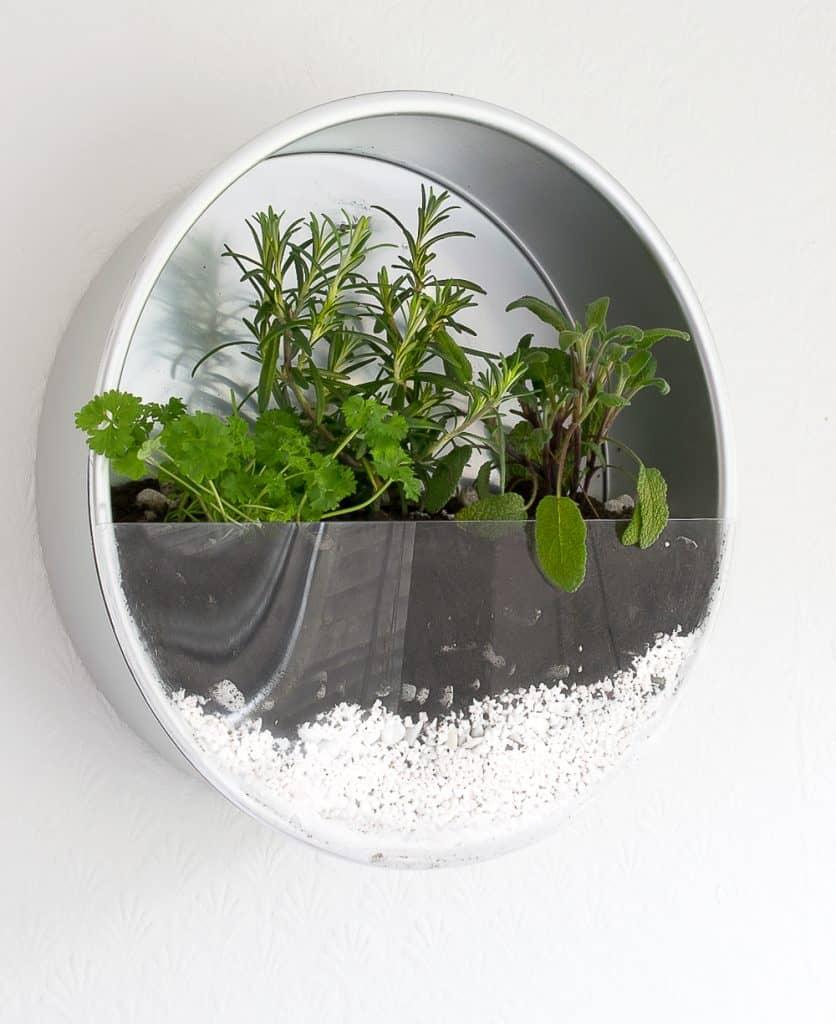 Baking tin indoor garden