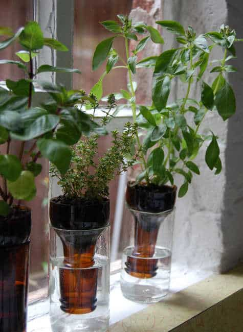 Bottle indoor garden