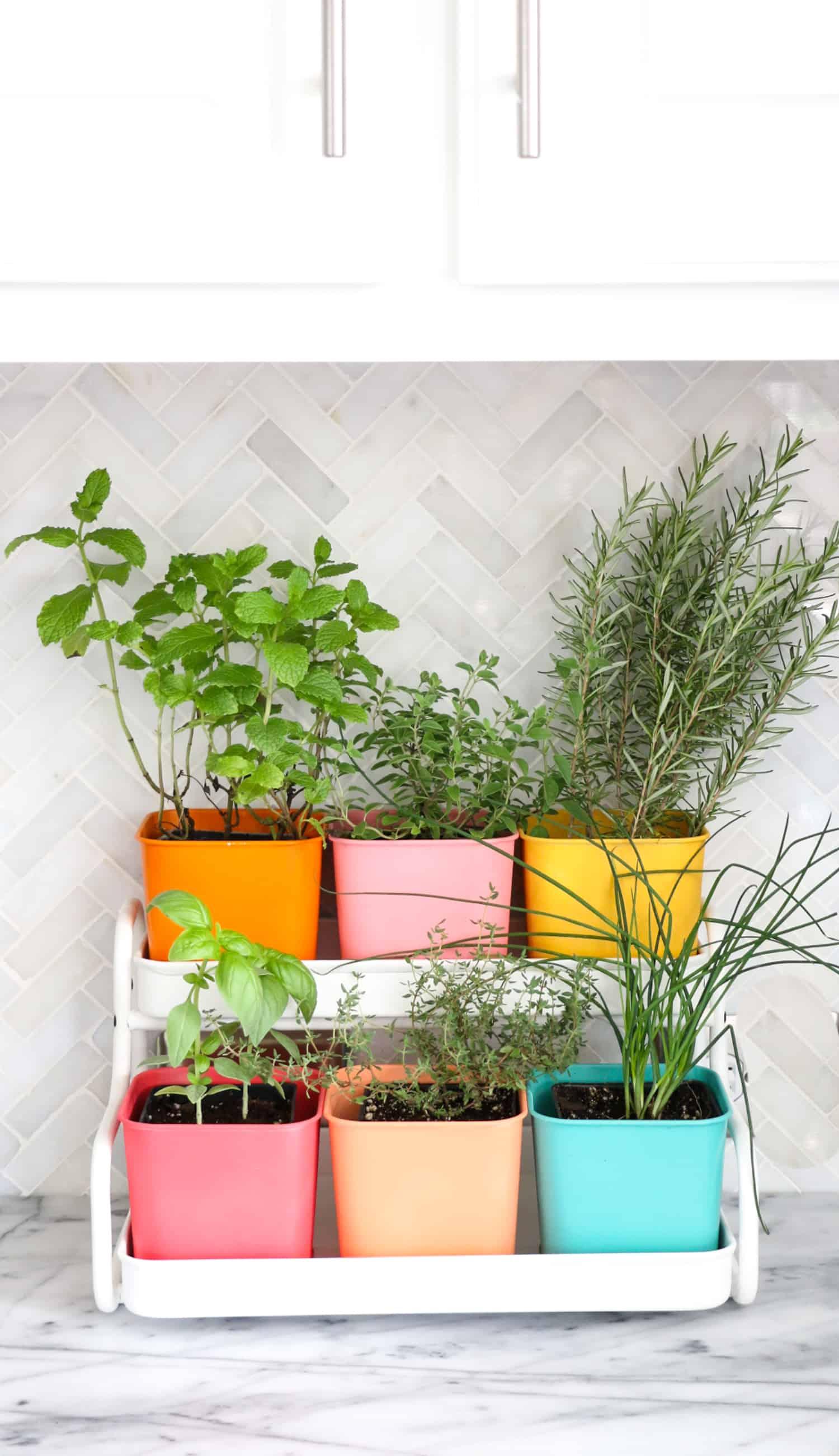 Colorful indoor garden
