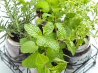 DIY Indoor Gardens: Nature Within the Home