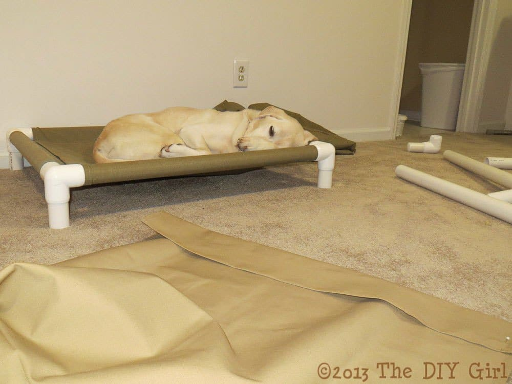 PVC pipe dog cot