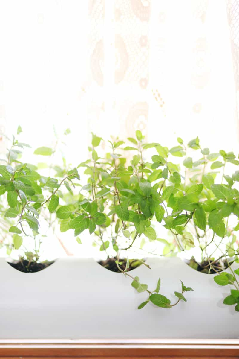 PVC pipe window planter