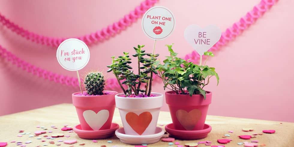 Valentine succulent party favours