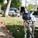 DIY Dog Bandanas For Your Stylish Pooch!